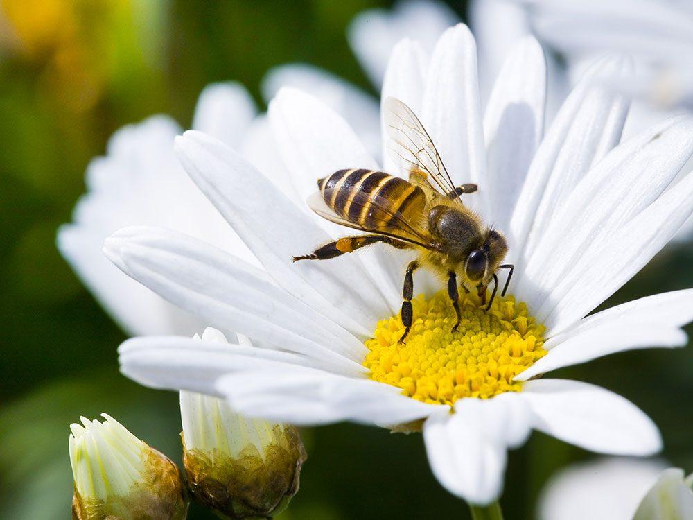 Attracting pollinators to your vegetable garden