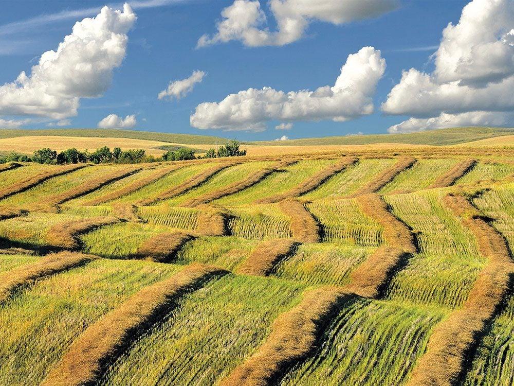 Saskatchewan during harvest season
