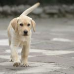 10 Secrets Your Dog's Tail is Trying to Tell You