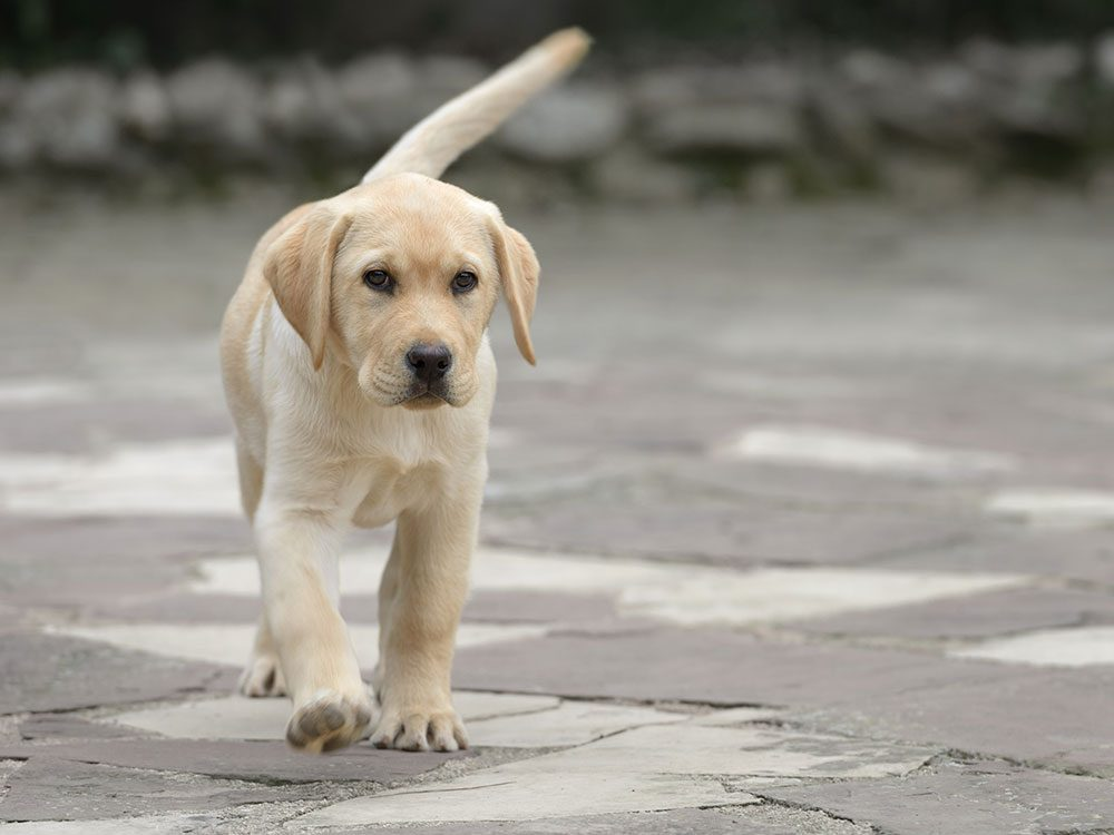 Secrets your dog's tail is trying to tell you