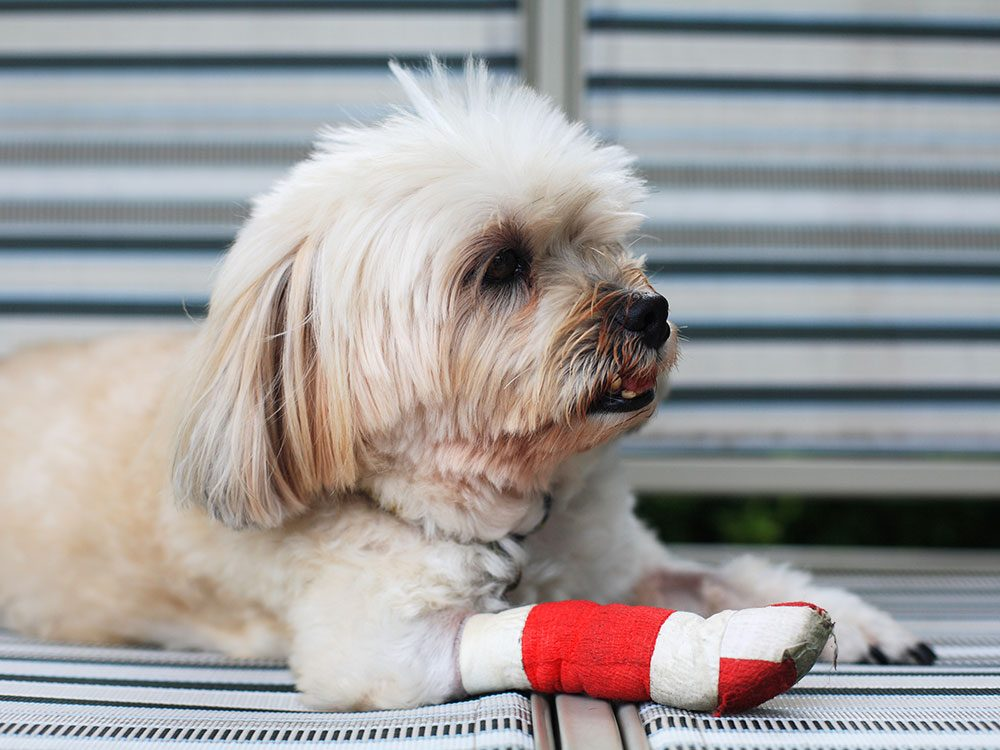 5 Sick Pet Symptoms That Are Often Misdiagnosed, According