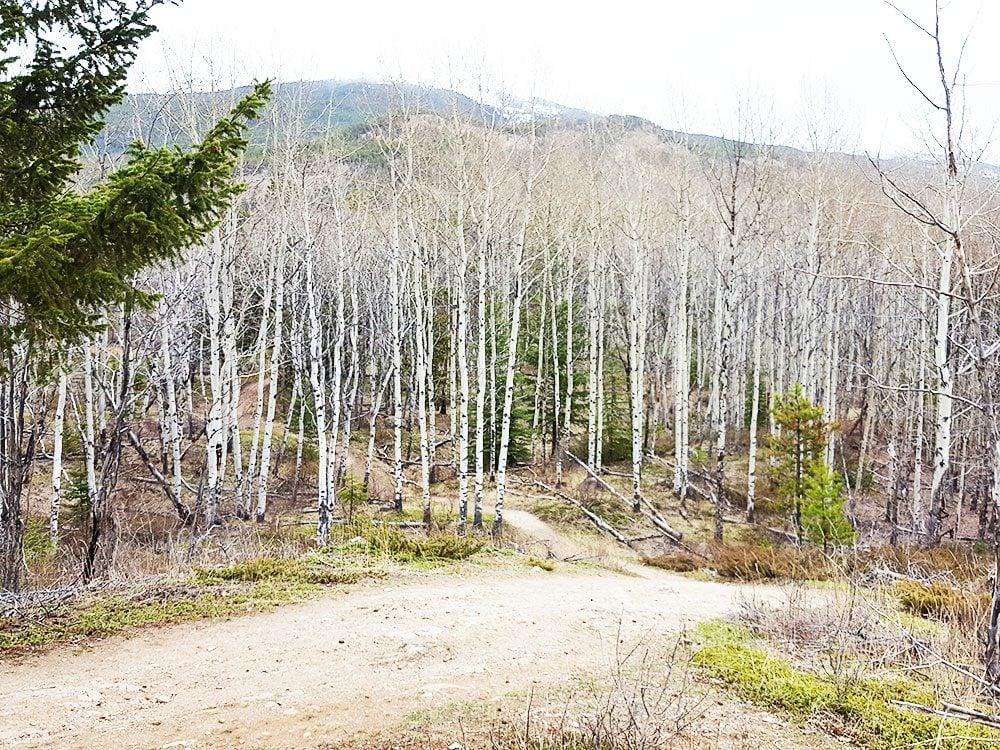 Land of the silver birch, Fairmont Jasper Park Lodge