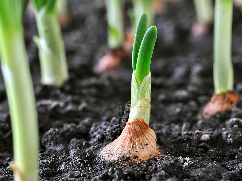 Start small with your vegetable garden