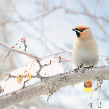 Winged Wonders: 14 Beautiful Canadian Birds Captured on Camera