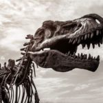 "12 Dinosaur ""Facts"" Scientists Wish You'd Stop Believing"