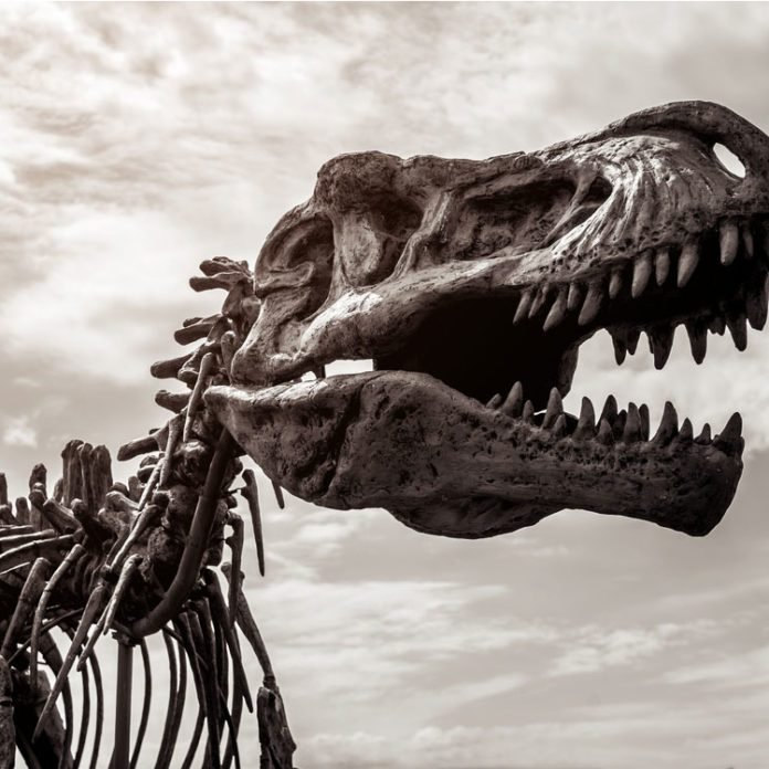 You Could Probably Have Outrun a T-Rex (and More Amazing Dinosaur Facts)