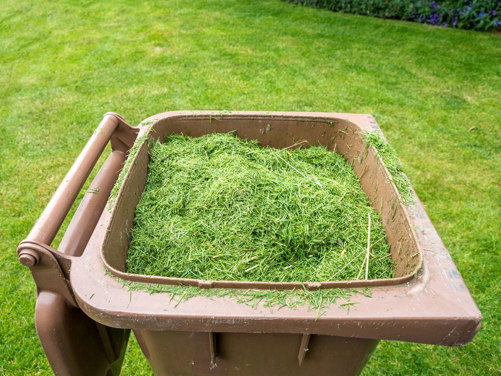 Grass clippings in bin