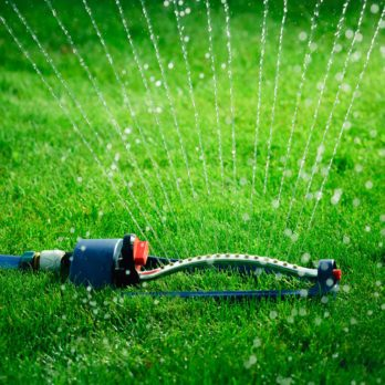 13 Things You Should Never Do to Your Lawn