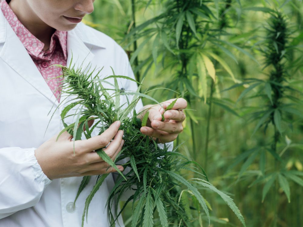 Female scientist in hemp field