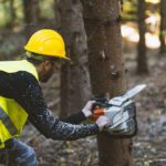 Lumberjack working with chainsaw in forest