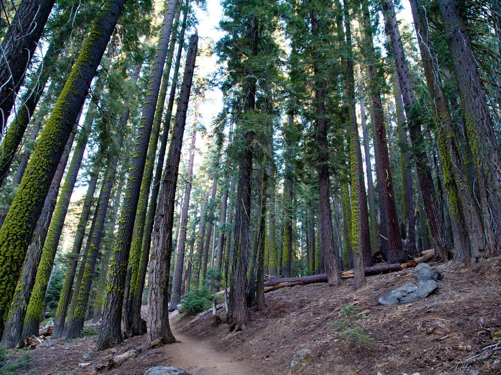 California forest scenery