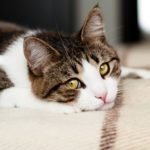 11 Subtle Signs Your Cat Is Depressed
