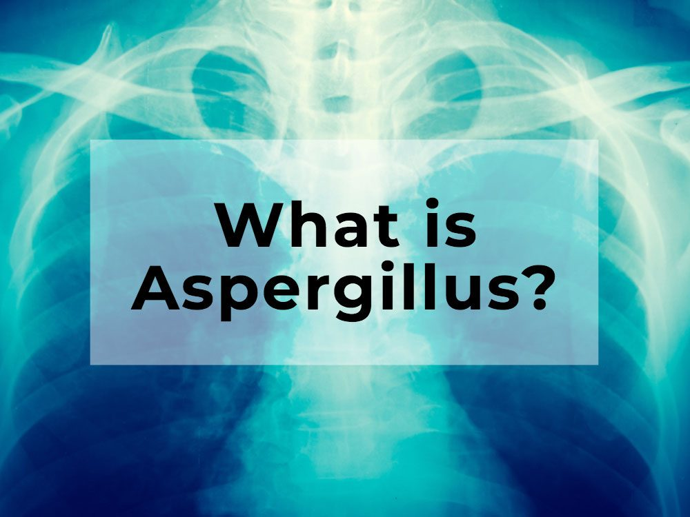 What is Aspergillus?