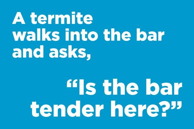 Corny jokes - a termite walks into a bar