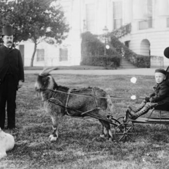 The Most Famous First Pets to Live in the White House