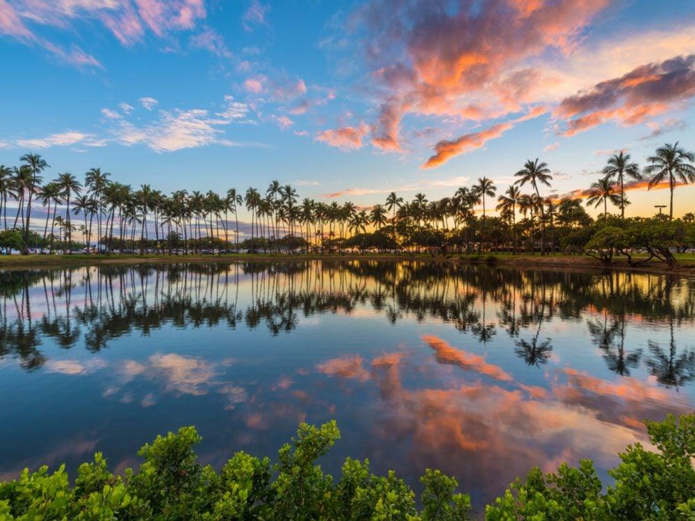 Row of palm trees in Honolulu, Hawaii