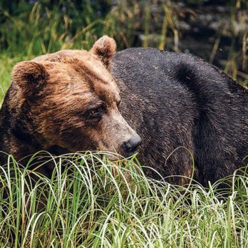 Khutzeymateen: A Journey to the Heart of Canada's Only Grizzly Bear Sanctuary