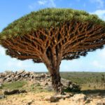 11 Jaw-Dropping Pictures of the World's Most Amazing Trees