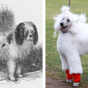 This Is What 6 Dog Breeds Looked Like 100 Years Ago