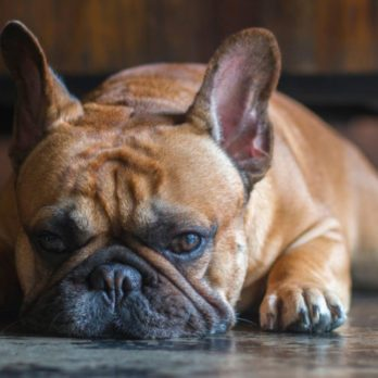 11 Warning Signs Your Dog Is Suffering from Heat Stroke