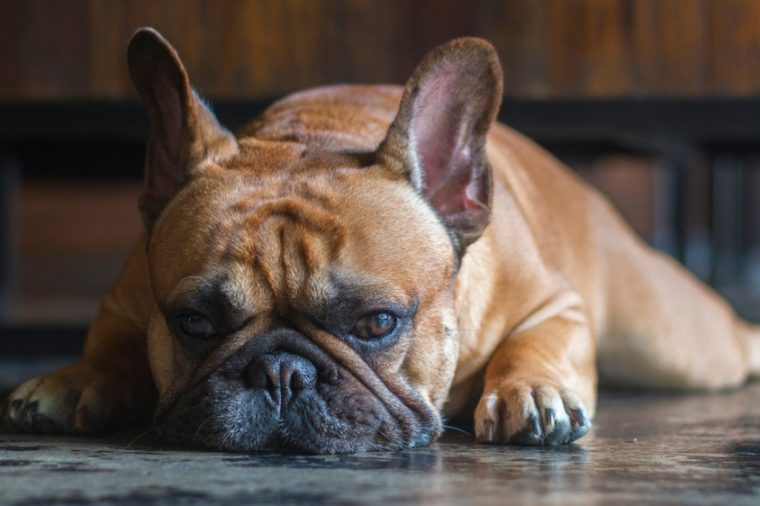 11 Warning Signs Of Heat Stroke In Dogs Reader S Digest