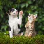 This Is What Dog and Cat Years Really Mean