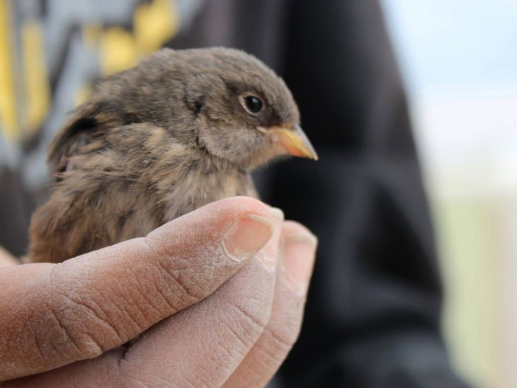 Close-up of tame bird in owner's hand
