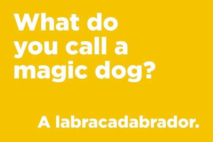 Magic dog joke