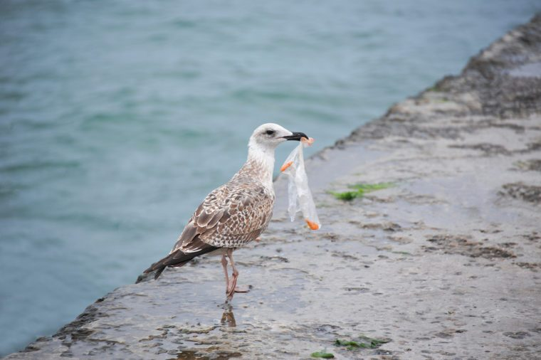 Seabirds are ingesting plastic