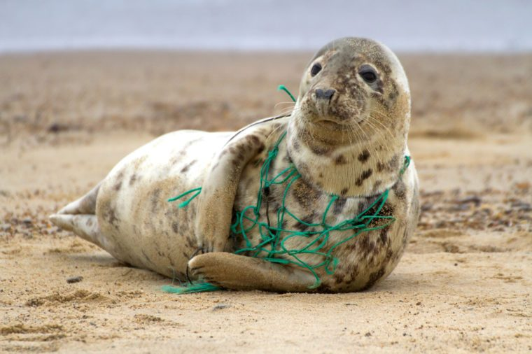 Plastic entanglement kills marine life