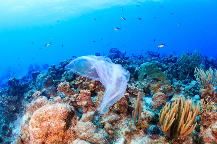 Coral reefs are dying