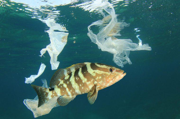 More plastic than fish