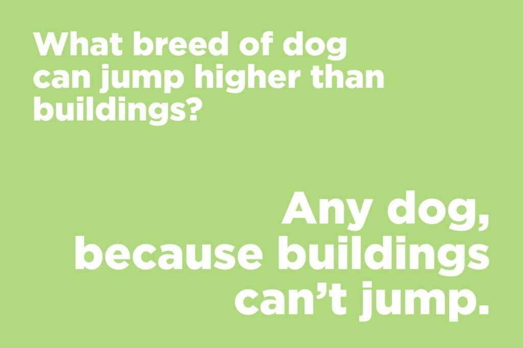 Image of: Really Funny What Breed Of Dog Can Jump Higher Than Buildings Mr Funnycom 75 Short Jokes That Will Get You Laugh Every Time