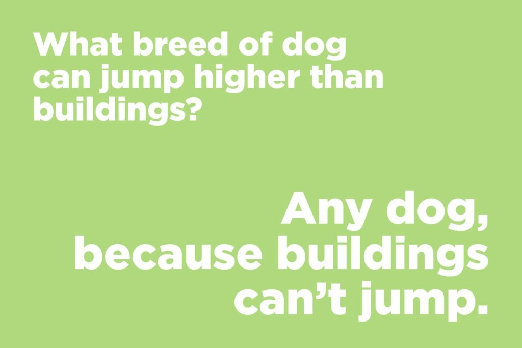 What breed of dog can jump higher than buildings?