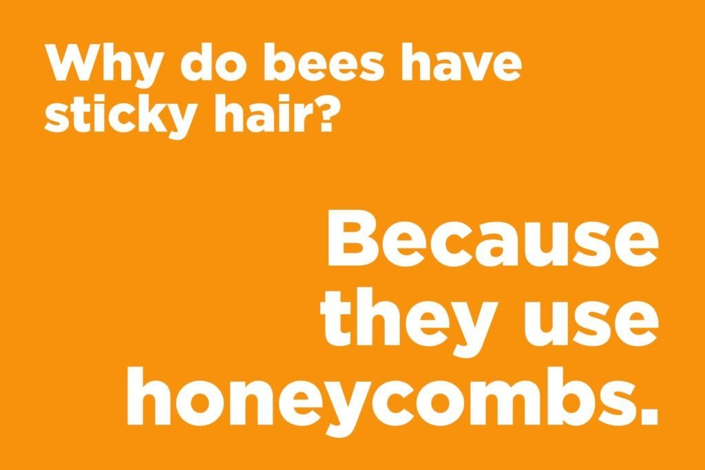 Why do bees have sticky hair?