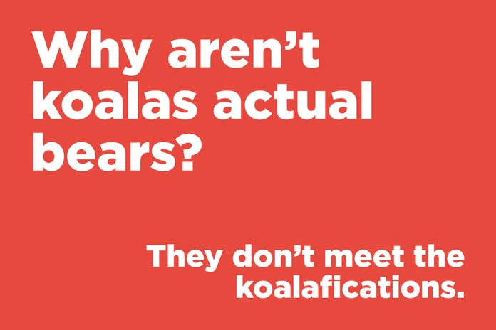 Why aren't koalas actual bears?