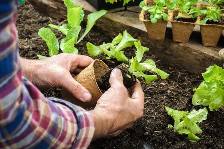Flowerpots in the soil