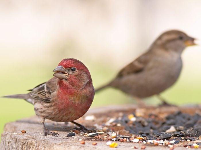 Make a coffee can bird feeder