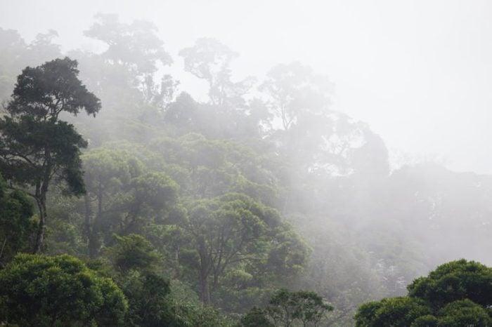 misty jungle forest near Rio at Brazil