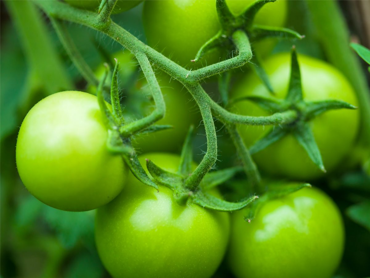 Uses for apples: ripen green tomatoes