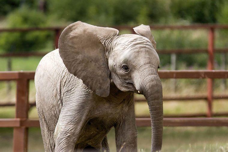 Drive-through elephant