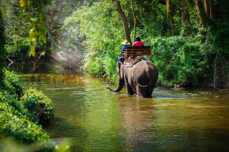 tourist riding on elephants Trekking in Thailand