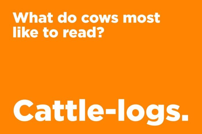 cows like to read