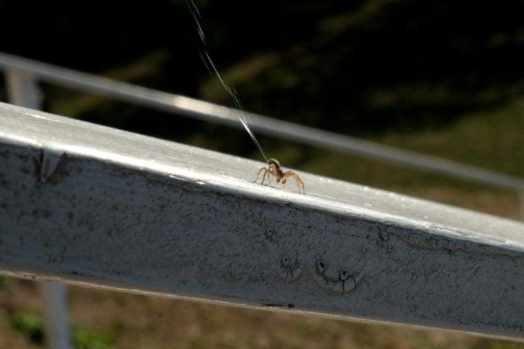 Ballooning-Spider