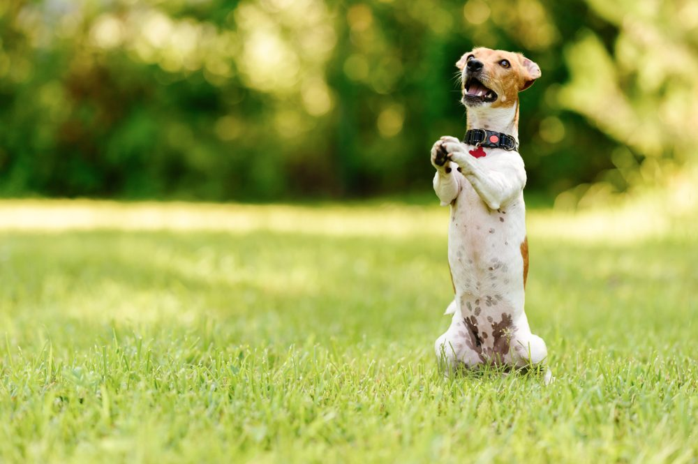 Cute dog standing on hind legs