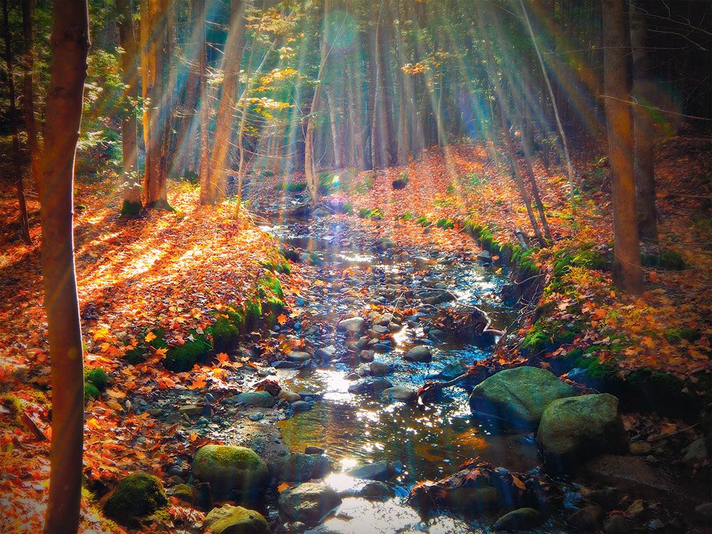 Autumn in Canada - sunlight in the forest