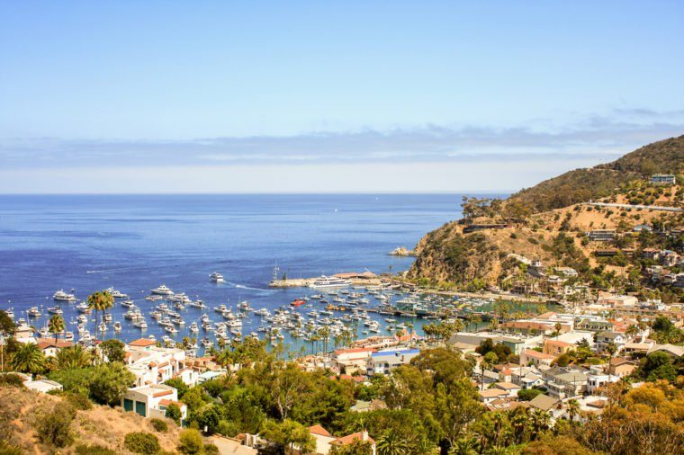 A view of boats and yachts at the port of Catalina Island