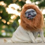 13 of the Best Halloween Costumes for Dogs