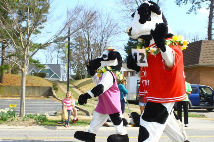 GLOUCESTER, VA - April 5, 2014: 28th annual Daffodil parade, The Chic Fillet eat more Chicken cows in the parade, The Daffodil fest and Parade is a regular event held each spring