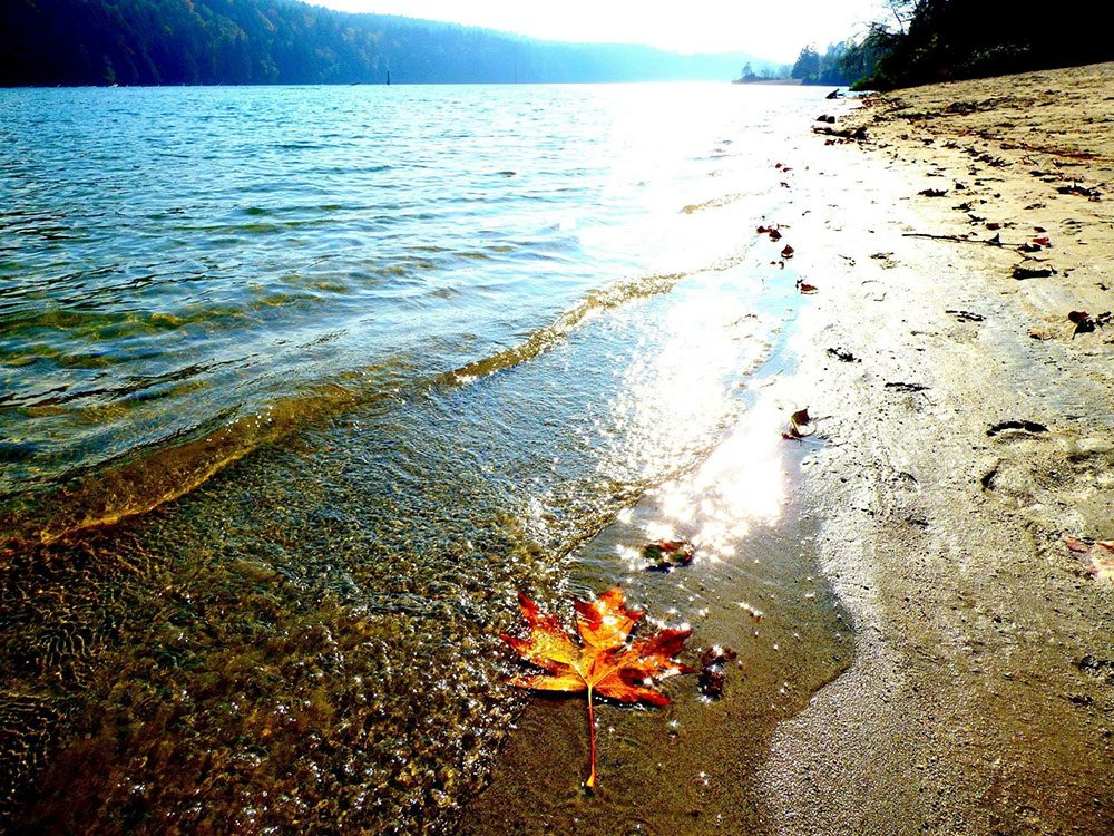 Maple leaf on beach
